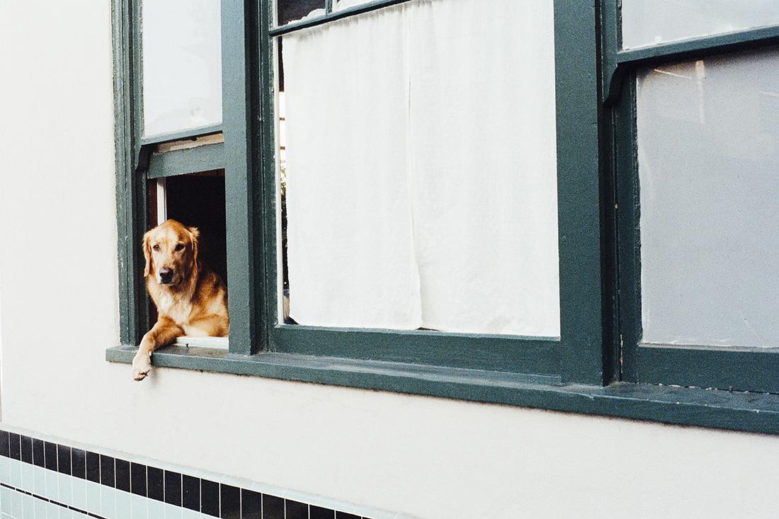 honest-broker-renting-with-pets